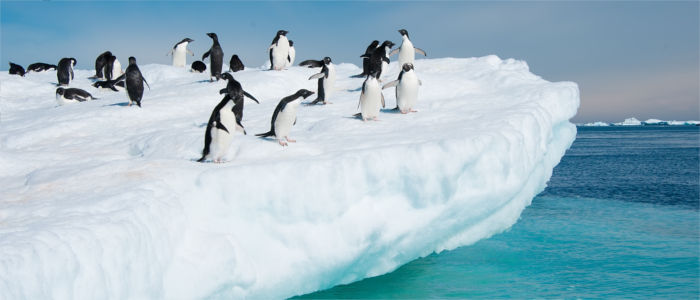 Penguins in the Antarctica