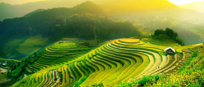 Rice fields in Asia