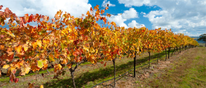 Wine-growing in the Australian Capital Territory