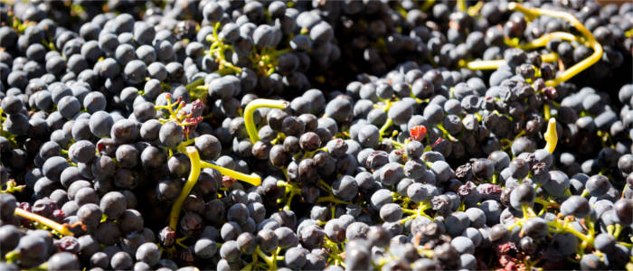 Wine production in the Barossa Valley