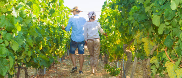 Couple in the Barossa Valley