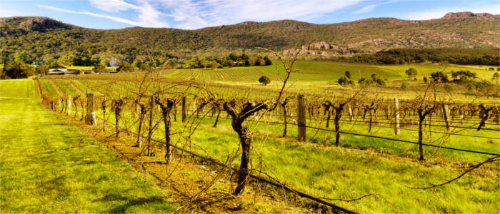 Wine cultivation in the Grampians