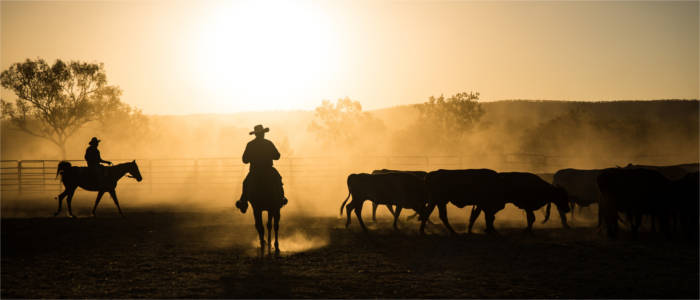 Cattle farming in Kimberley