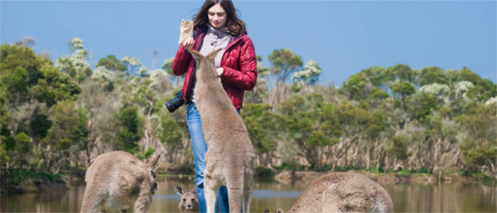 Experiencing Australia's fauna at first hand in Victoria
