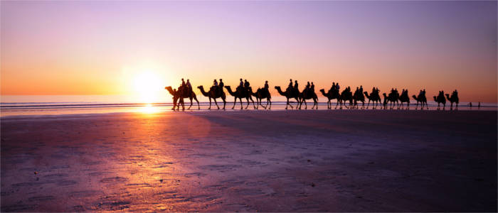 Riding camels at the coast of Western Australia