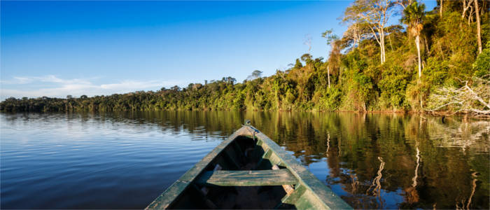 Nature at the Amazon River