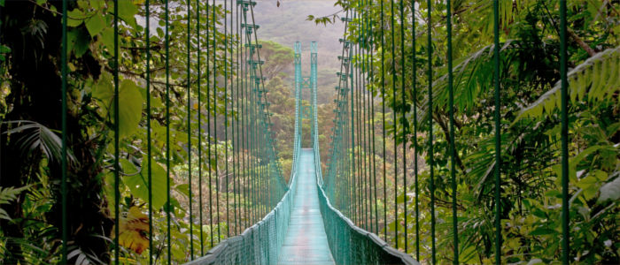 Suspension bridge in the rainforest of Costa Rica