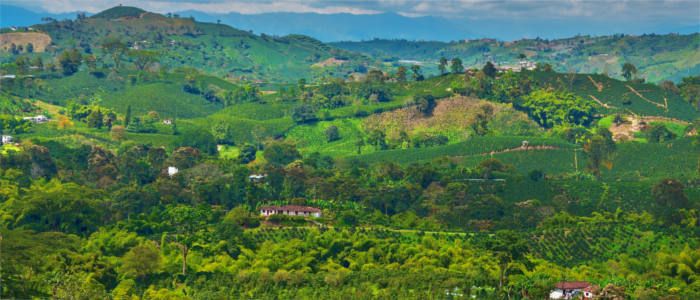Coffee farming in Colombia
