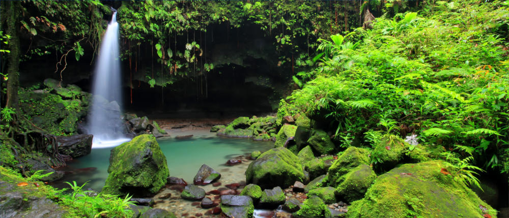 Dominica's Emerald Pool