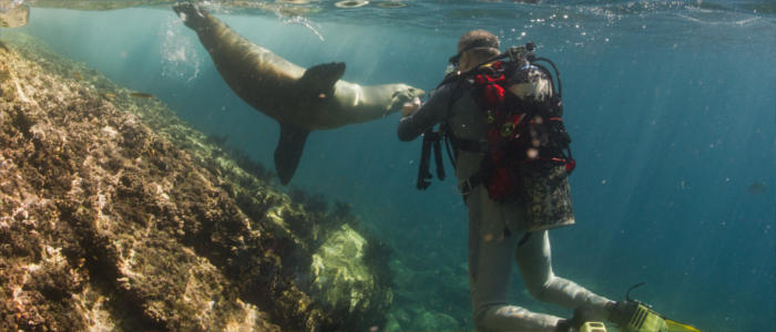 Diving with the islands' animals