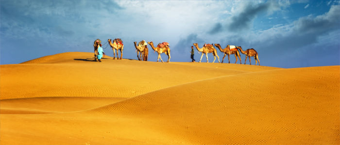 Camels in the desert in Egypt