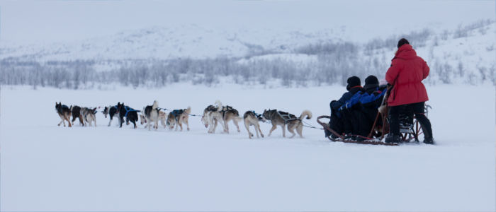 Dog sledges in Finland