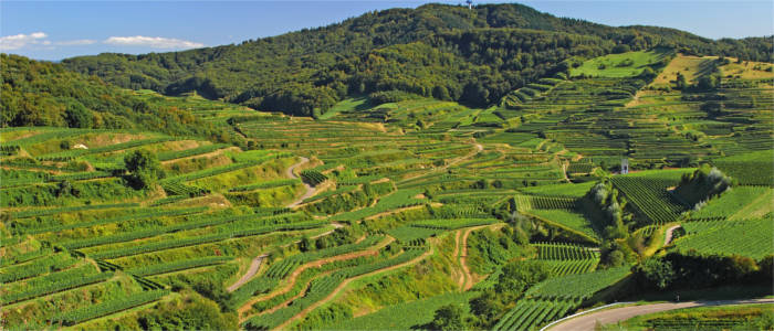 Famous wine-growing region