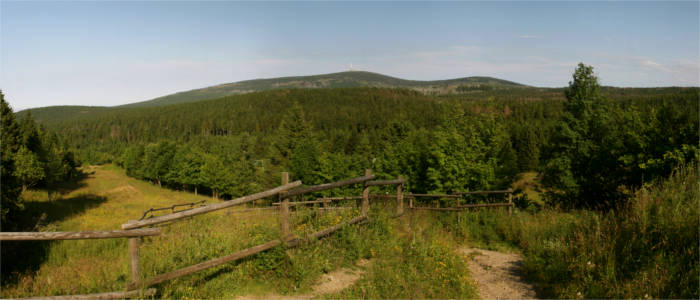 Nature in the Harz