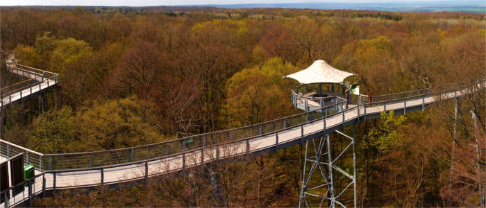 Canopy walkway in the Hainich National Park
