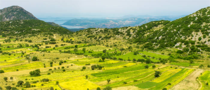 Lentil fields on the Ionian island of Lefkada