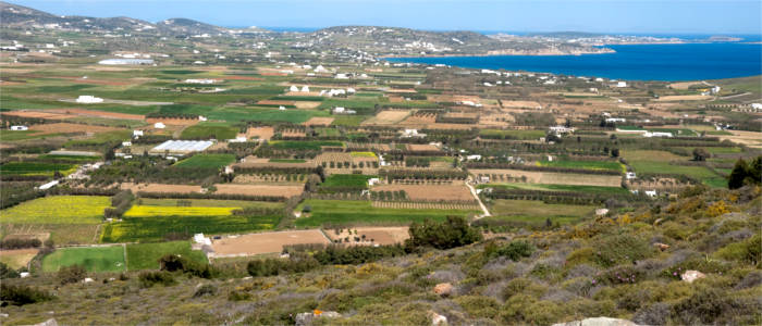 Agriculture on Paros
