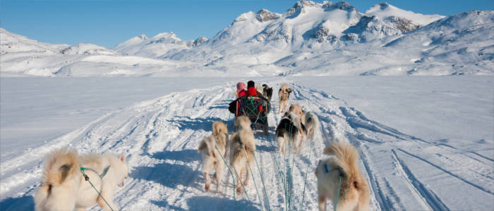 Greenland's dog sledges