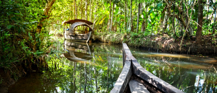 Boat trip through the Indian rainforest - Kerala