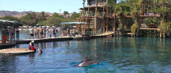 Dolphin Park in Israel - Eilat