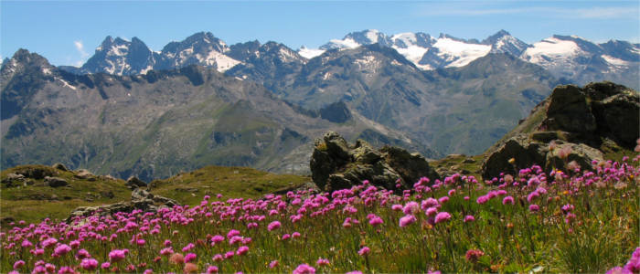 A flower field in front of a wonderful mountainous landscape
