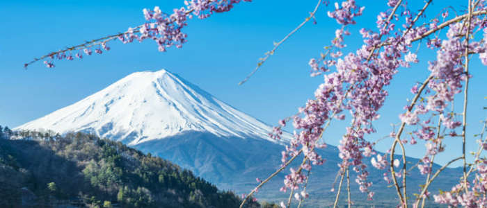 Japan's Mount Fuji and cherry blossoms