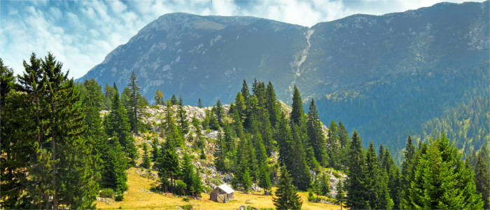 Border of Montenegro - the mountain of Mokra Gora