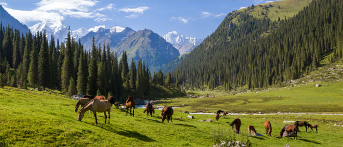 Horses in front of the Tien Shan in Kyrgyzstan