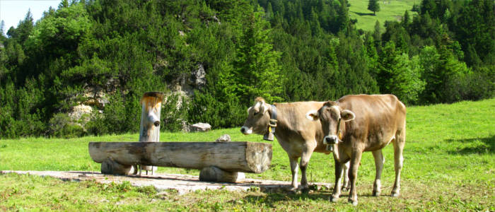 The typical fauna in Liechtenstein