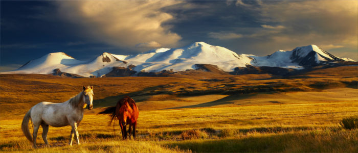 Horses on the Ukok Plateau, Mongolia