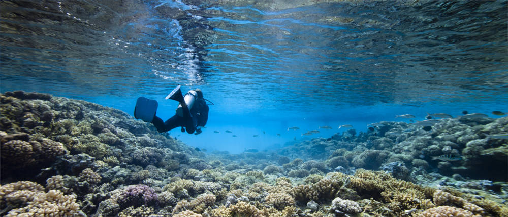 New Caledonia - diving