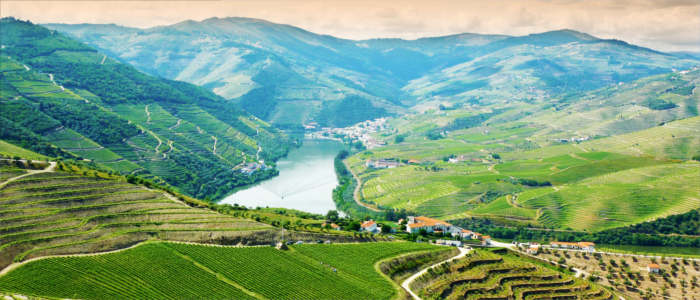 Wine-growing region in Douro in Portugal