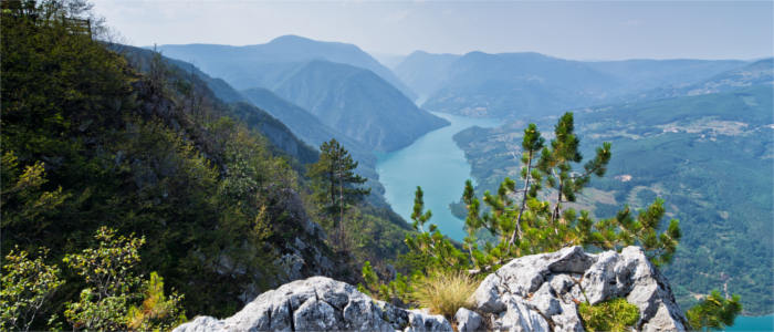 Serbia's mountain of Tara and Drina River