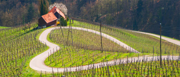 The Slovenian wine-growing region Maribor