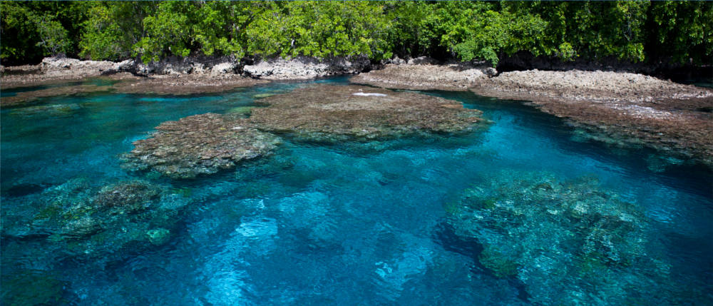 The coral reefs of the Solomon Islands