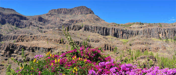 Flowers and mountains on Gran Canaria