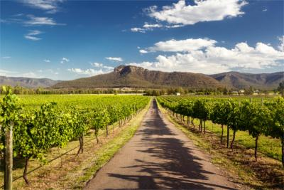 Wine-growing in the Hunter Valley
