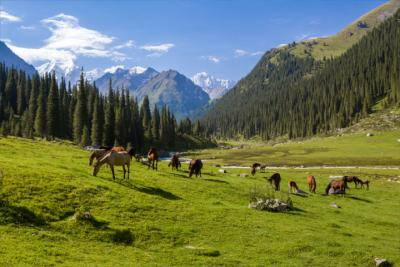 Country Kyrgyzstan