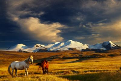 Country Mongolia