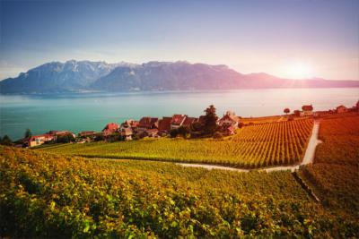 The wine-growing region Lavaux in Vaud