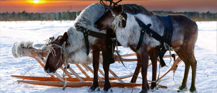 A sleigh ride through Sweden