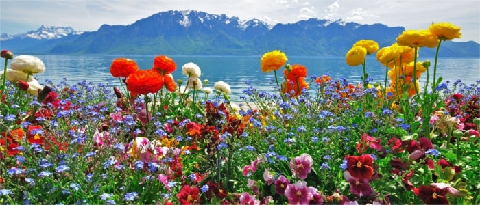 Flowers at Lake Geneva, Lake Geneva against the backdrop of the Alps