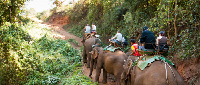 Elephant tours in Thailand