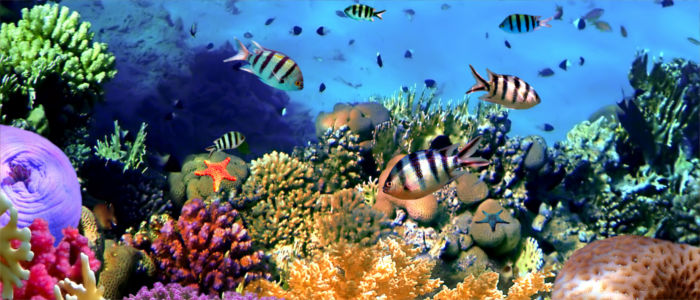 Fish in the coral reef in Trinidad and Tobago