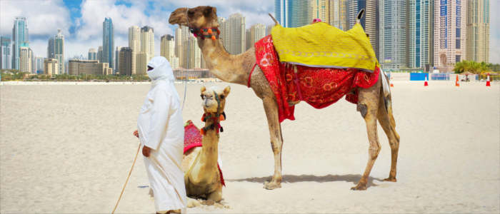 Camel rides in the United Arab Emirates