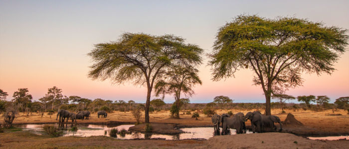 Wild animals gather at a waterhole in Zimbabwe